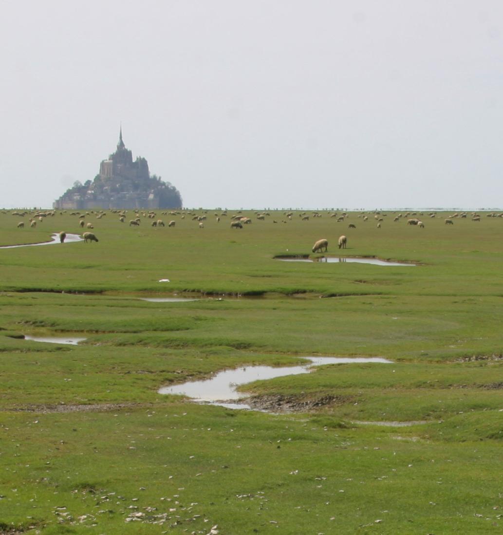 6964-Manoir de la Roche Torin agneau pr+®s-sal+®s -® Thierry Houyel CRT Normandie--® Thierry Houyel CRT Normandie.jpg