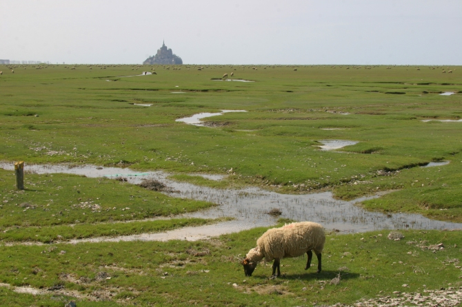 1782-mont-st-michel-mouton-pr-sal-ceric-lorang-ceric-lorang