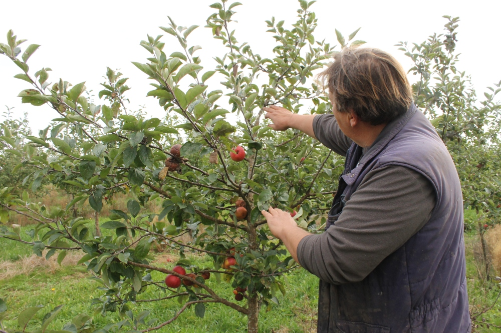 Orchard le Cerisey.JPG