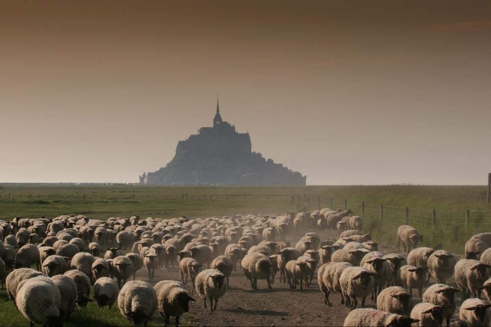 1829-mont-saint-michel-prc2ae-salc2ae-c-patrick-micheletti-fotolia.com-usage-crt-seulement.jpg
